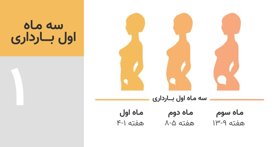 سه ماه اول بارداری